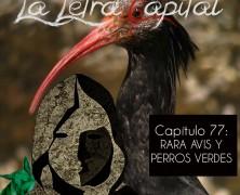 PODCAST CAPÍTULO 77: RARAS AVIS Y PERROS VERDES